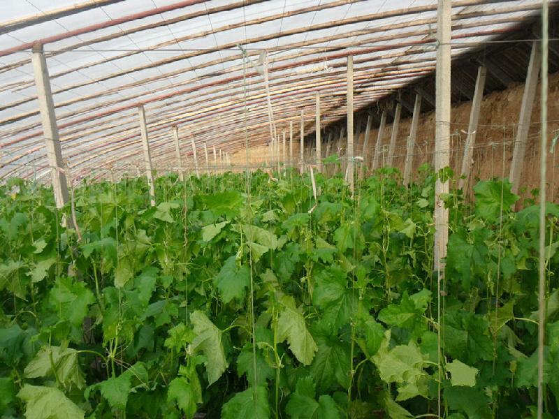 蔬菜大棚效果图-温室工程高清图片
