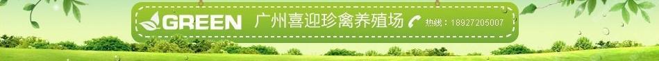 广州喜迎珍禽养殖场