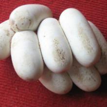 供应广西草蛇蛋乌蛇蛋水绿蛇蛋南蛇蛋