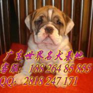 广州天河区哪里有正规狗舍图片