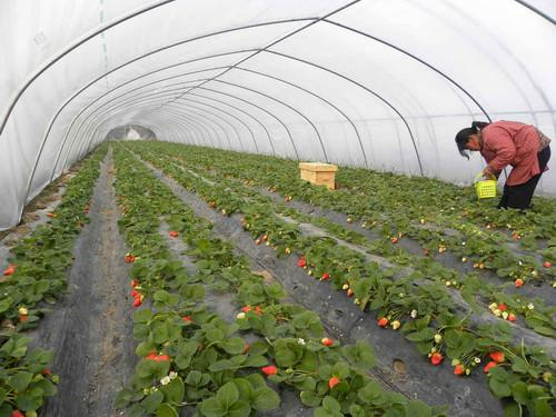 大棚价格_建造温室大棚需要多少钱农业用具中国工业信