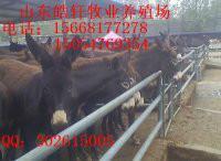 供应德州驴肉驴西门塔尔小尾寒羊图片