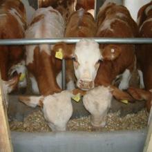 供应东北牲畜交易市场