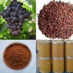 供應原花青素95葡萄籽提取物