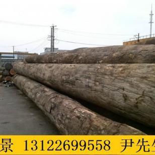 四川山樟木价格图片