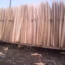 供应桉木面板