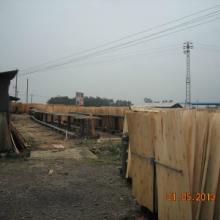 供应广西桉木单板