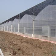 安徽那家温室公司建的好图片