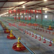 供应肉鸡养殖水线料线    畜牧养殖 水线料线 鸡舍水线料线 肉鸡水线料线