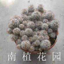 供应仙人掌植物的功用