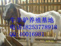 北京 盛发/生产厂家:盛发万家牧业
