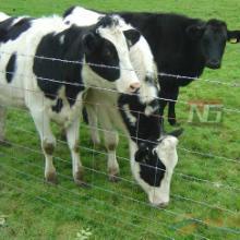 供应草原围网设施野生动物圈离围栏网