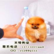 广州越秀区什么地方有买宠物狗图片