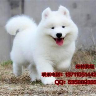 东莞哪里能买到健康的小狗图片