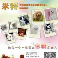 天河区哪里有卖宠物狗宠物猫图片