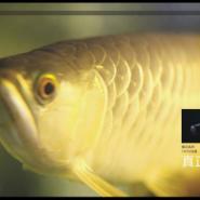 艾可斯照明LED防水灯管龙鱼专用照图片