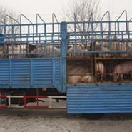 华东大型养猪场价格图片