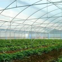 供应塑料薄膜温室,福建塑料薄膜温室
