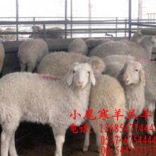 供应绵羊养殖山羊养殖技术波尔山羊养殖批发