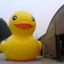 供应疯狂的鸭子、充气大黄鸭、香港大黄鸭厂家批发
