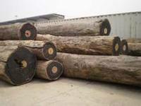 供应宁波进口东南亚原木集装箱进口图片