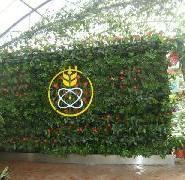 内蒙古别墅休闲室内图片墙植物最佳浙江绿化别墅图片