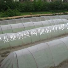 供应防虫网