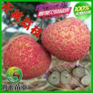 无核荔枝果苗图片