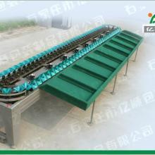 供应YSXD-66-8-86亿顺单面选果机