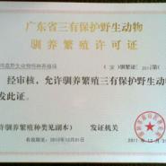 广西大王蛇养殖技术图片图片