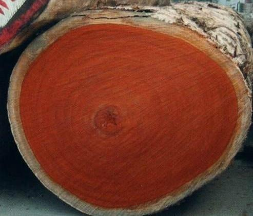 供应竹材原木材进口到大陆图片