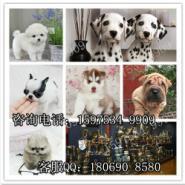 广州边度有宠物店广州哪里有卖边图片