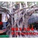 一流假树制作图片