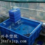 供应养鱼养龟专用周转箱 配套过滤箱