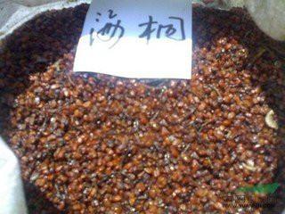 供应海桐种子价格