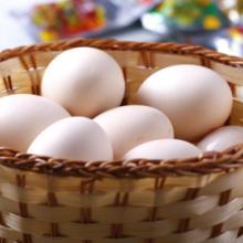 供应散养有机土鸡蛋