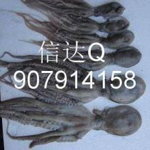 供应进口冷冻水产品章鱼