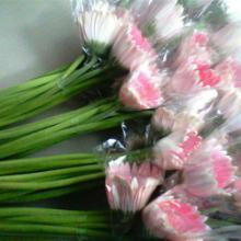供应扶郎鲜花