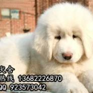 深圳有正规狗场吗图片