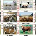波尔山羊成年羊图片