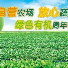 供应如何更好的保住新鲜蔬菜的营养