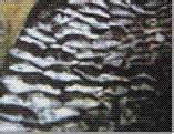 供应封堵材料高效阻燃封堵材料