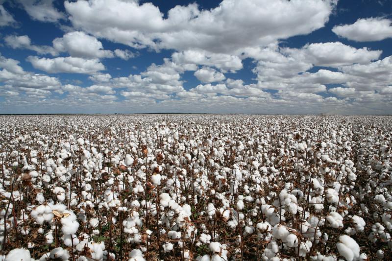 供应贵州棉花供货商,贵州棉花供货商电话,贵州棉花供货商价格
