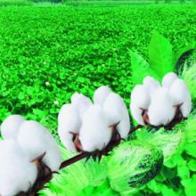 供应棉花被批发
