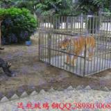 供应玻璃钢动物雕塑供应商,玻璃钢动物雕塑批发商,仿真老虎