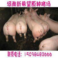 供应三元崽猪价格三元猪崽价格批发