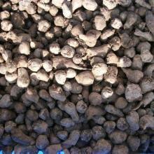 供应滇川魔芋好种子