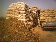 供应玉米秸秆草料