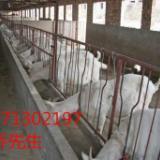 供应关中奶山羊羊奶与牛奶的对比