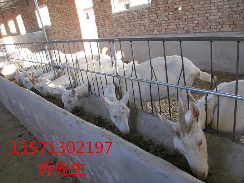 富平县 刘集镇 养殖基地 山羊/上一条:羊舍的建设下一条:羊舍的建设